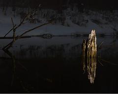 树桩曝光图