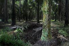 给枣椰树打光风景照