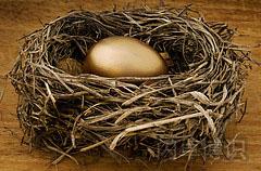 巢中的金蛋