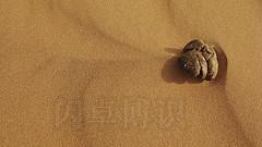 难得的沙漠松露