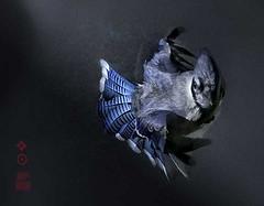 闪卓博识读者Bradford Fuller拍摄的梦幻般的鸟儿
