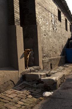 Carl McLarty拍摄的巷子里的小狗