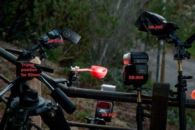 热靴闪光灯压暗现场光定格蜂鸟的拍摄布光图