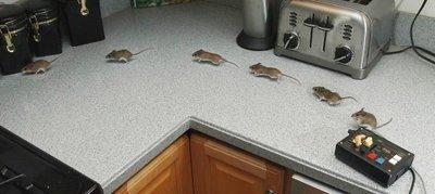连拍到的老鼠的照片