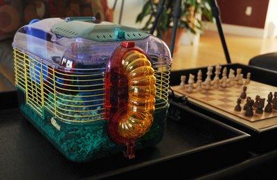 让老鼠度过冬天的温暖房子