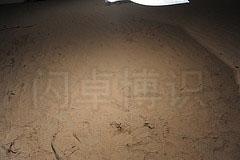 大卫·豪比抓拍的一张细沙的照片