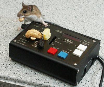 在WaveSensor声波传感器上偷吃东西的老鼠