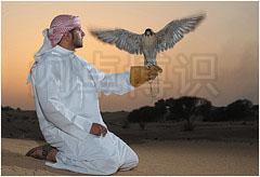 大卫·豪比以落日为背景使用同轴辅助光结合硬光拍摄的Omar和鹰