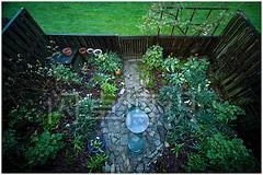 大卫·豪比拍摄的花园